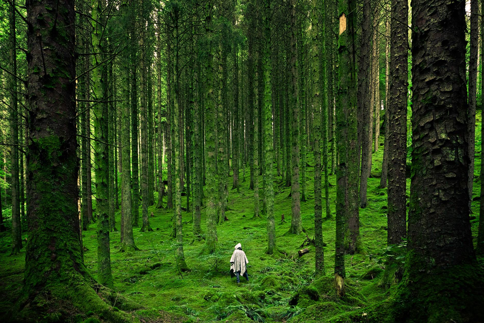 forest hiking trees